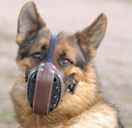 German shepherd dog muzzle