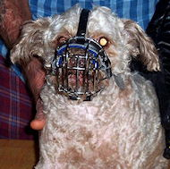 Pekepoo dog muzzle - Small Dog Wire Basket Muzzles