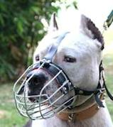amstaff basket dog muzzle