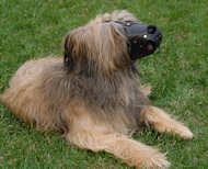 Everyday Briard Leather dog muzzle