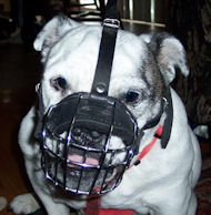 Short Wire Basket Dog Muzzle for breeds with short snout