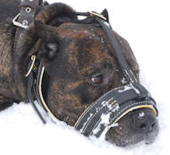 Royal Nappa Leather Dog Muzzle - FULL PADDED DOG MUZZLE