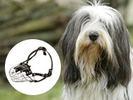 Bearded Collie Muzzle
