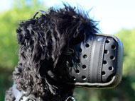 Black Russian Terrier Muzzle