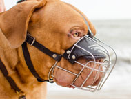 dogue-de-bordeaux-muzzles