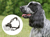 english-cocker-spaniel-muzzles