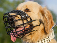 golden-retriever-muzzles