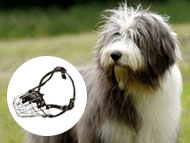Polish Lowland Sheepdog muzzle