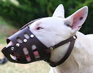 Leather dog muzzle for english Bull Terrier