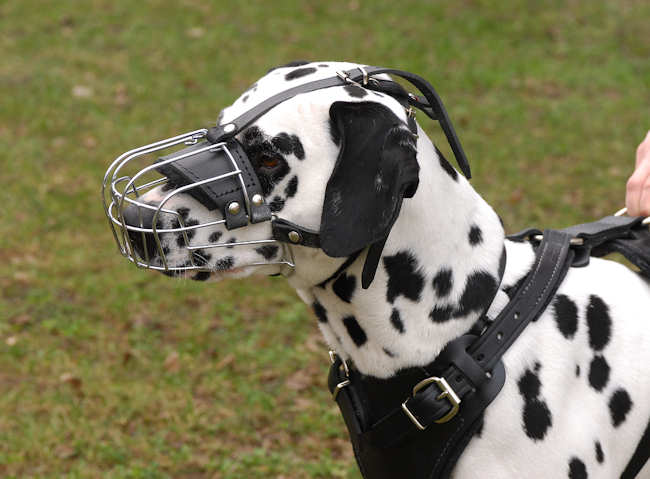 Dalmatian Wire Basket dog muzzle-Basket muzzle for Dalmatian