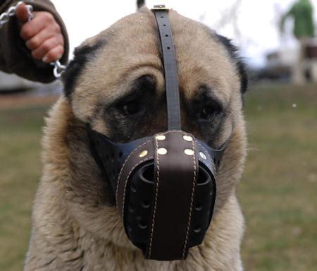 Anatolian-Shepherd leather dog muzzle