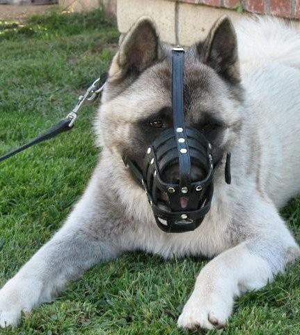 leather dog muzzle for akita or similar breeds
