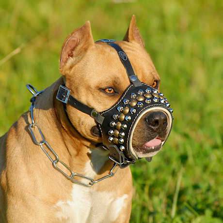 Studded Pitbull leather dog muzzle - best designer dog muzzle