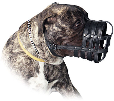 Every Day Leather Large Dog Muzzle for Bullmastiff