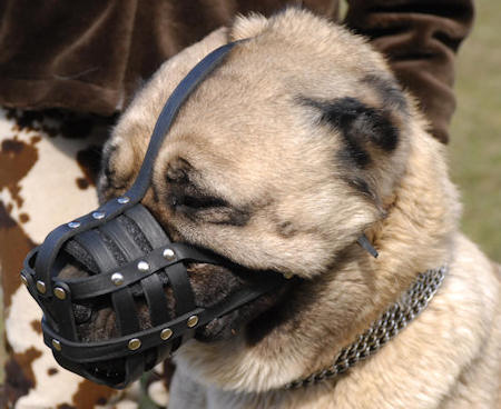 leather dog muzzle for Shepherd dog