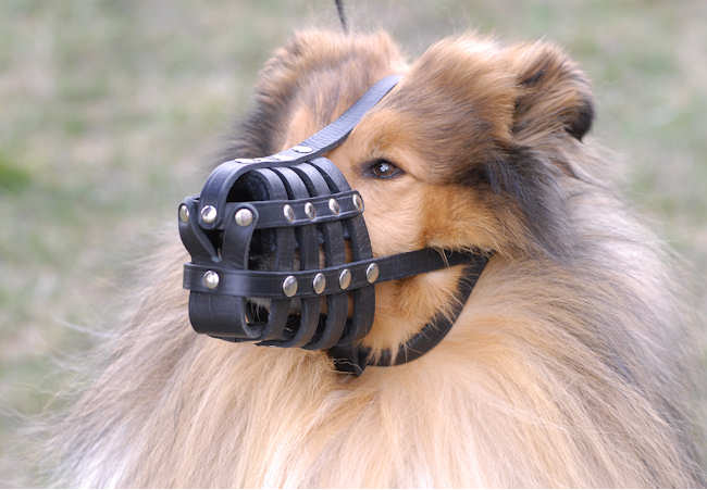 Everyday Lightweight Ventilation Collie Muzzle