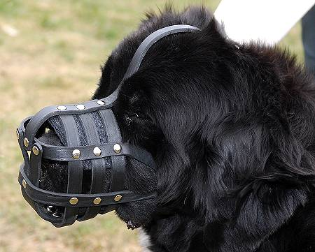 newfoundland-dog-muzzle-leather-m41_LRG.