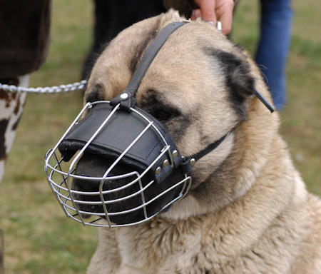 wire basket dog muzzle for Shepherd