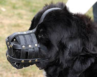 Newfoundlan ventilation dog muzzle for walking