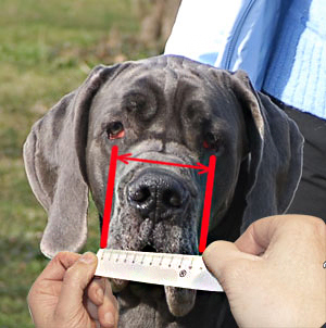 How to size your dog's dimensions