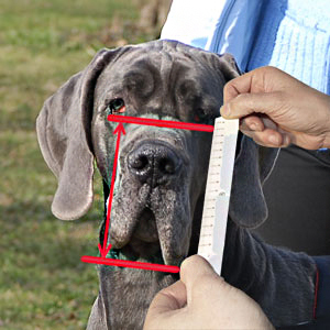 Spend several minutes and measure your dog