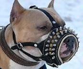 Spiked dog muzzle for Pitbull
