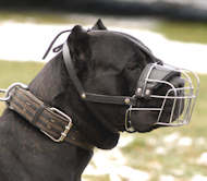 wire basket dog muzzle for Cane corso