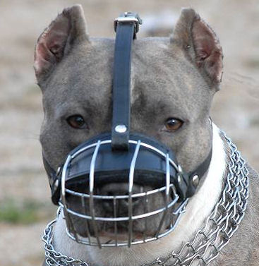 Pitbull Wire Dog Muzzle - Wire Basket Dog Muzzle for Pit Bull